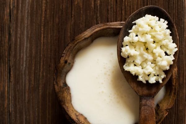 Молочный гриб полезные свойства и противопоказания
